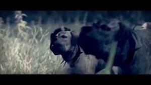 Total War Rome II: Beasts of War Pack Launch Trailer HD 1080P